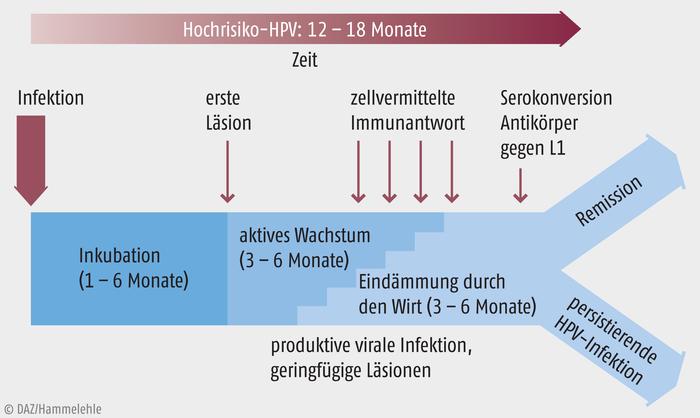 hpv impfung arány