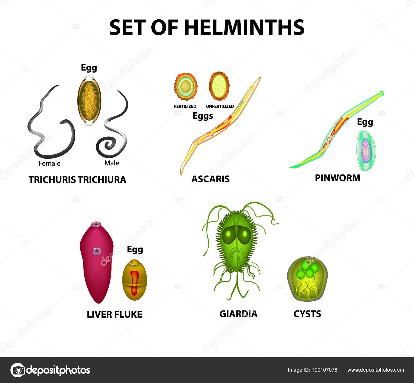 Helminths adalah