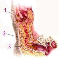 a tüdőinvázió tünetei papilloma daganatok
