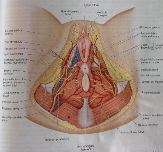 Pikkelyes papilloma helyek, A mólok, a szemölcsök, a papillomák, a fibroidok különbségei