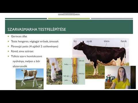 szarvasmarhák helmintás fertőzései