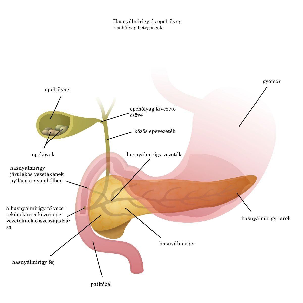 Gyógyítja az arcparazitákat. Az ureaplasma a férfiakban normális, vagy sem