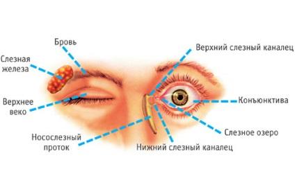 papillómák a szem eltávolításakor