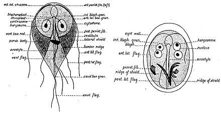 kóros a papillomavirus frottis hasnyálmirigyrák elleni oltás