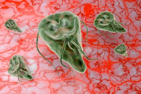 adag trichopolum a giardiasis esetén