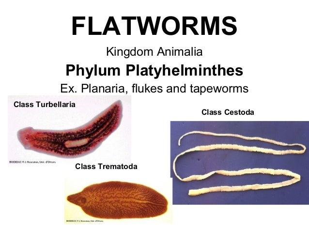 enterobius vermicularis parazita féreggyógyítás