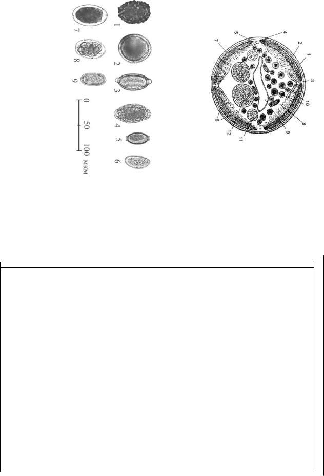 Trichocephalosis parazitológia. Férgek gyermekeknél és kezelés