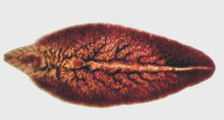 hogyan fordul elő a nemi szemölcs fertőzés? pleurális rákot okoz