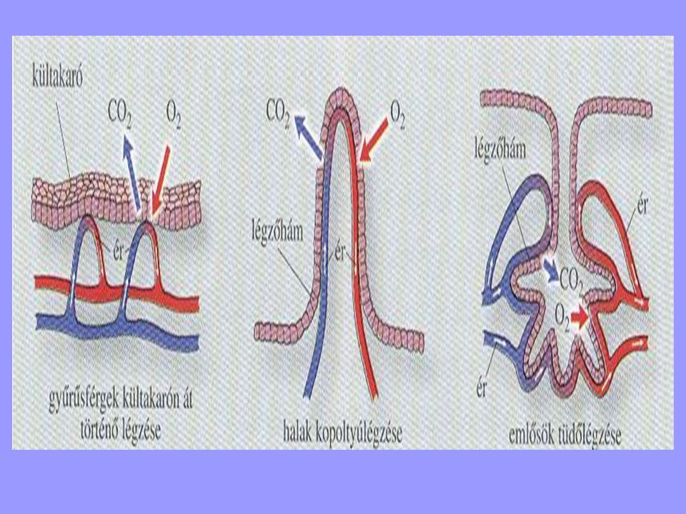 féreg légzése a féreggyógyszer neve az emberek számára