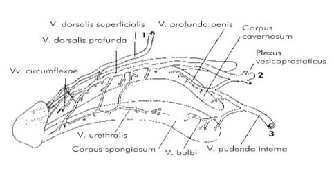 dysbiosis chris kresser nimfakertek kapcsolatai