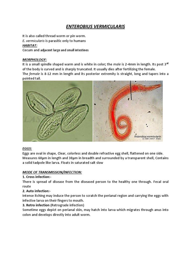 vermigális pinworm kezelés