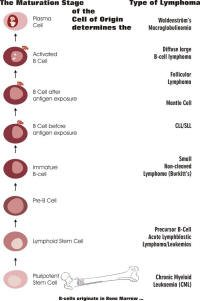 hyperkeratosis bőr papilloma
