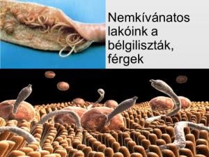 Gyógymódok minden típusú parazita ellen. Hatékony gyógymód minden típusú parazita ellen,