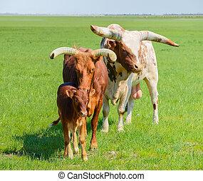 bika család