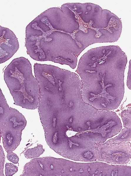Tények és tévhitek az immunrendszerről