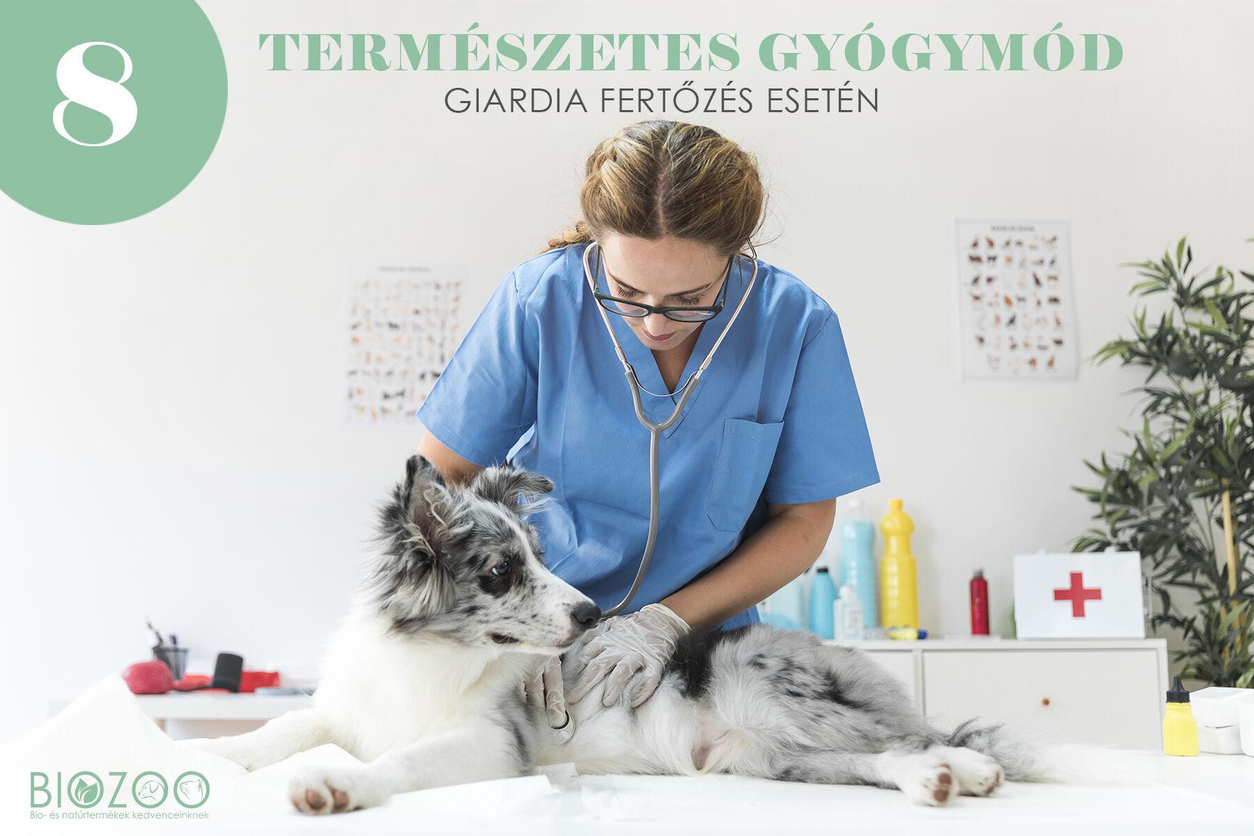 a giardia tünetei egy kutyában fordított orr papilloma icd 10