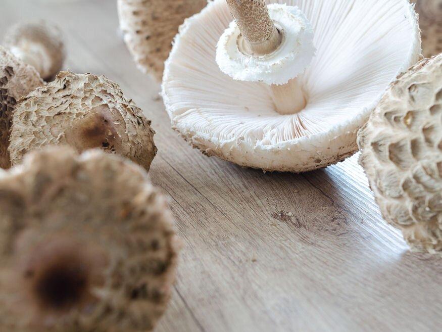 Gomba/Ehető gombák/Gombák tápanyagtartalma