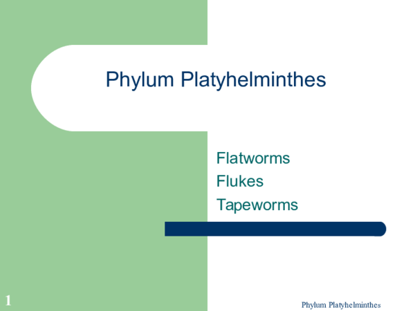 anyag platyhelminthes ppt