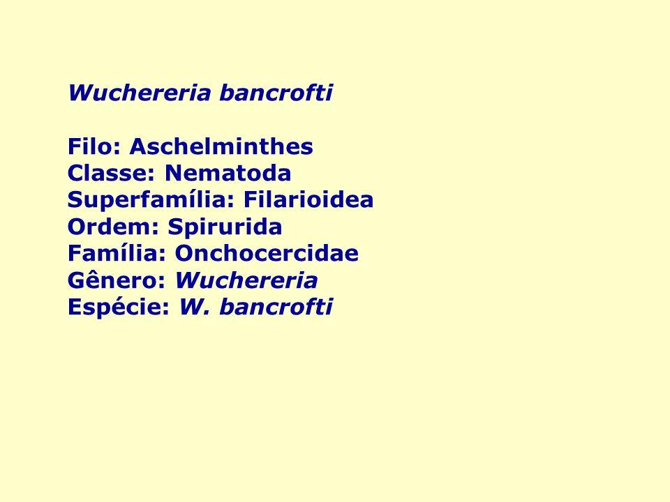 Filo aschelminthes caracteristicas