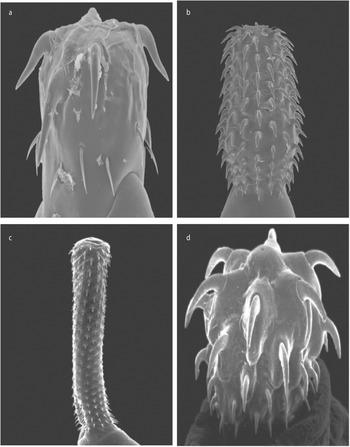 Pinworms a tüdőben és az orrban Pinworms a tüdőben történő kezelés