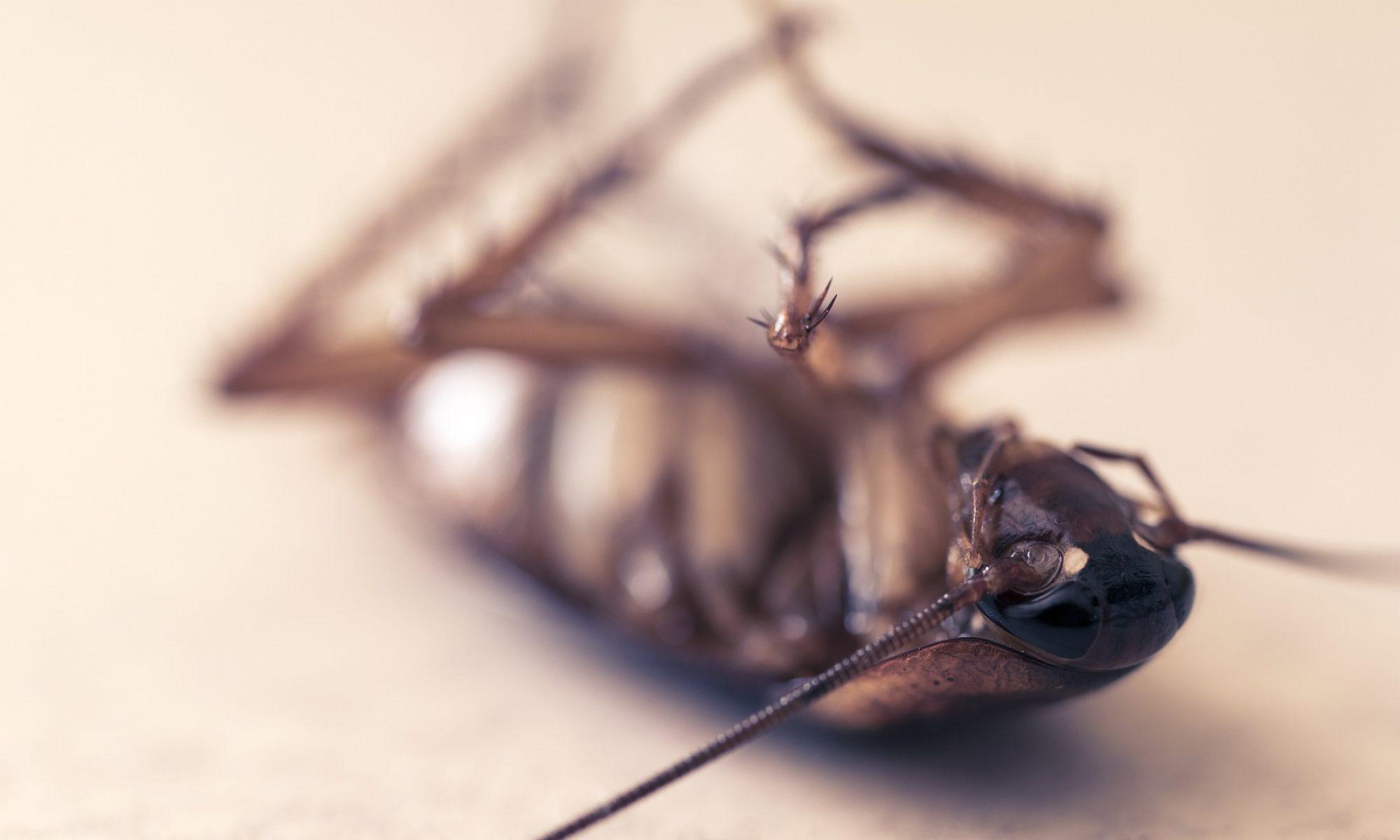 emberi rovar érzései