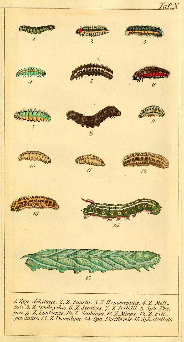 A platyhelminthes lárva stádiumai, Trichuriasis