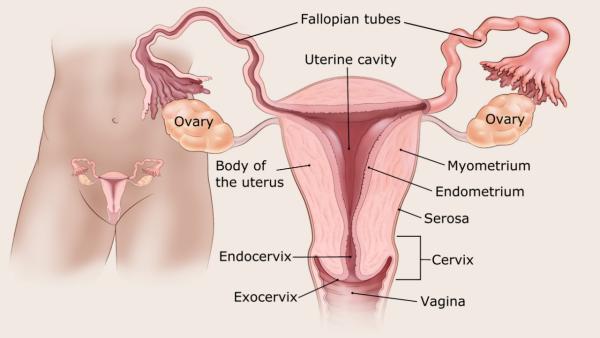 endometrium rák hisztopatológia