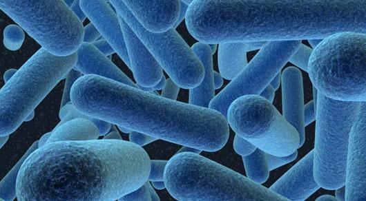 Élő baktériumok jelenthetnek megoldást a testszagra
