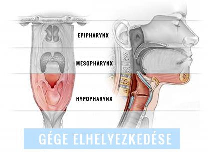 enterobius vermicularis víztározó
