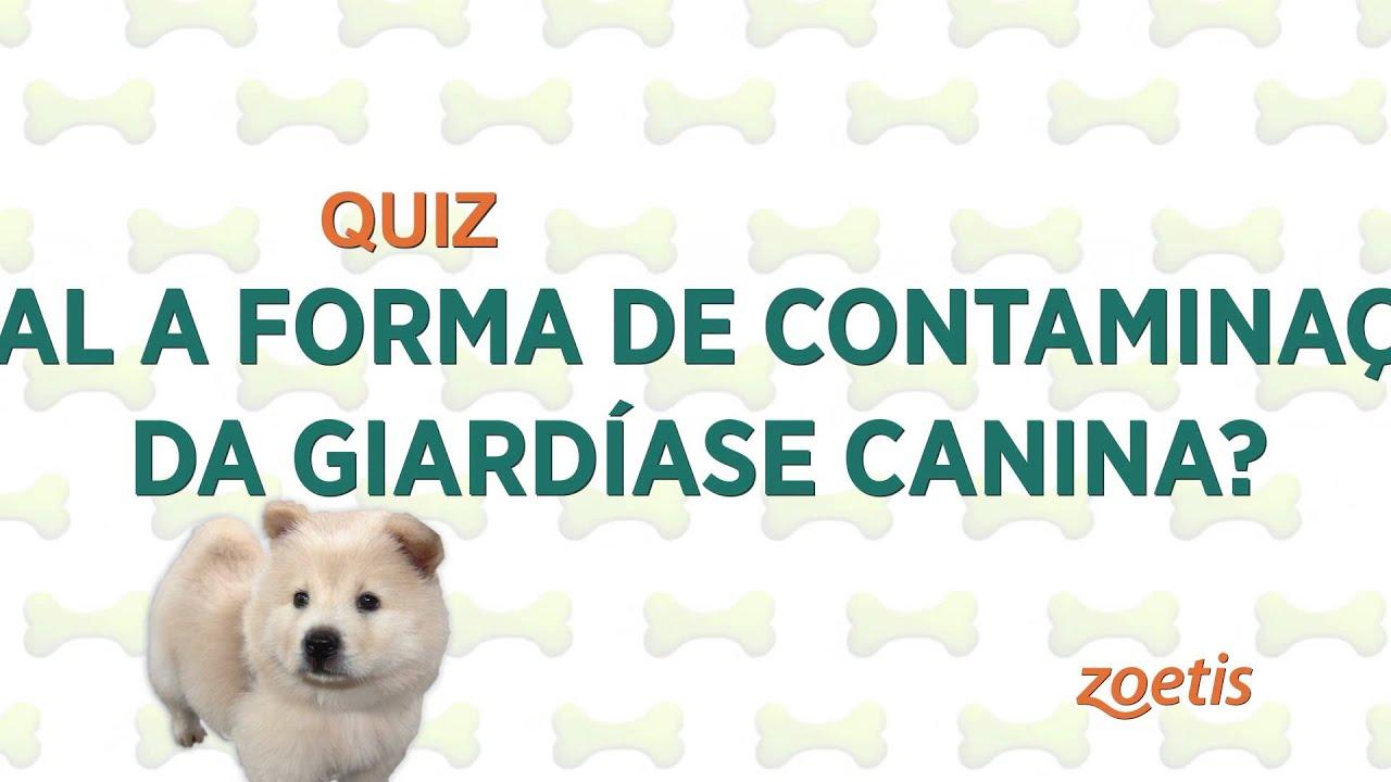 8 természetes gyógymód kutyánk Gardia-fertőzése esetén Giardiasis fertőzés megelőzése