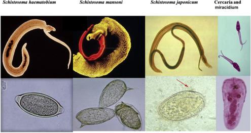 BNO-10-01 – Fertőző és parazitás betegségek