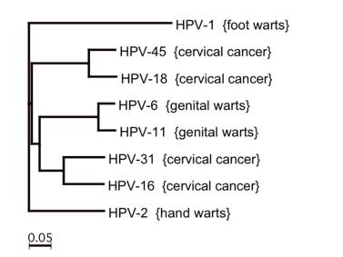 Kásler: Idén ősztől a 7. osztályos fiúk is megkaphatják a HPV-elleni oltást