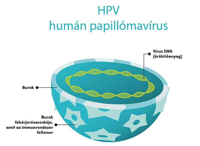 hpv látens vírus