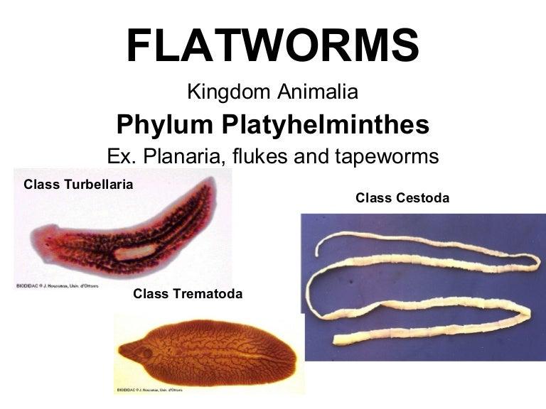 helminták amelyek emberről emberre terjednek parazita légzés
