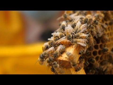 szemölcsök a méh tüneteiben