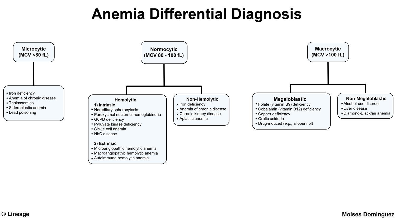 A thalassemia