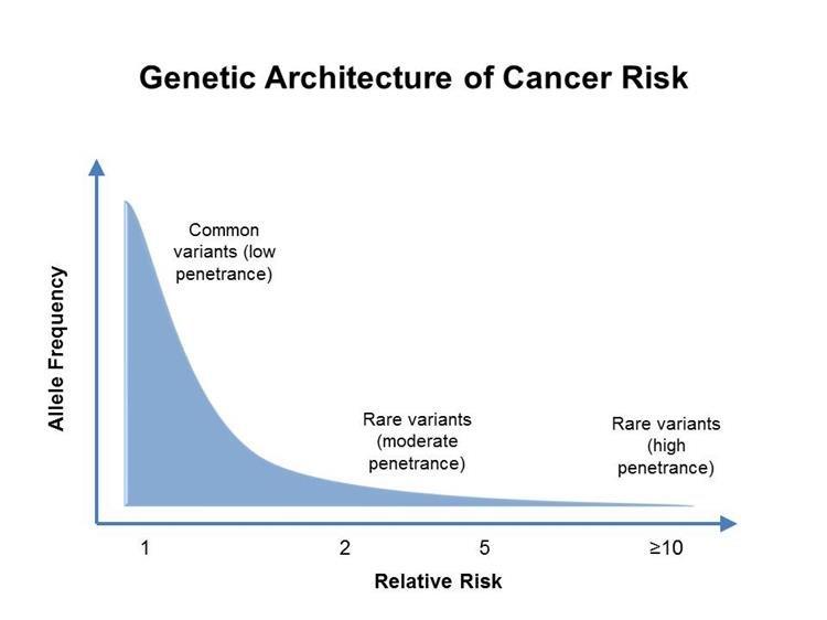 vastagbélrák genetikai heterogenitás