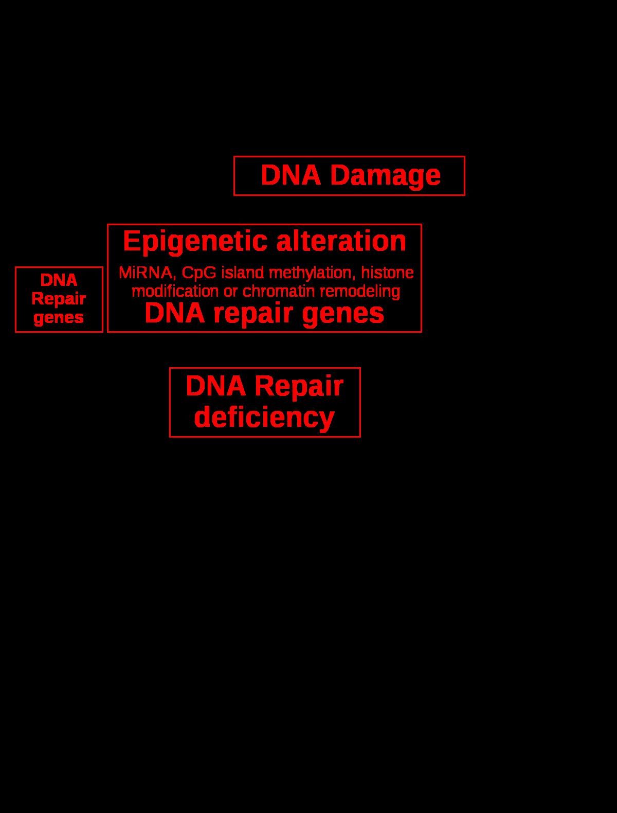 prosztatarák genetikai markerek Férfi húgycső rák tünetei