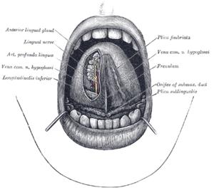 papilloma a nyelv alján