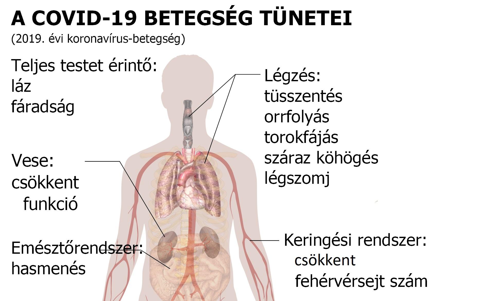 Törpe szalagféreg röviden. Tünetek és a szalagféreg kezelése az emberekben
