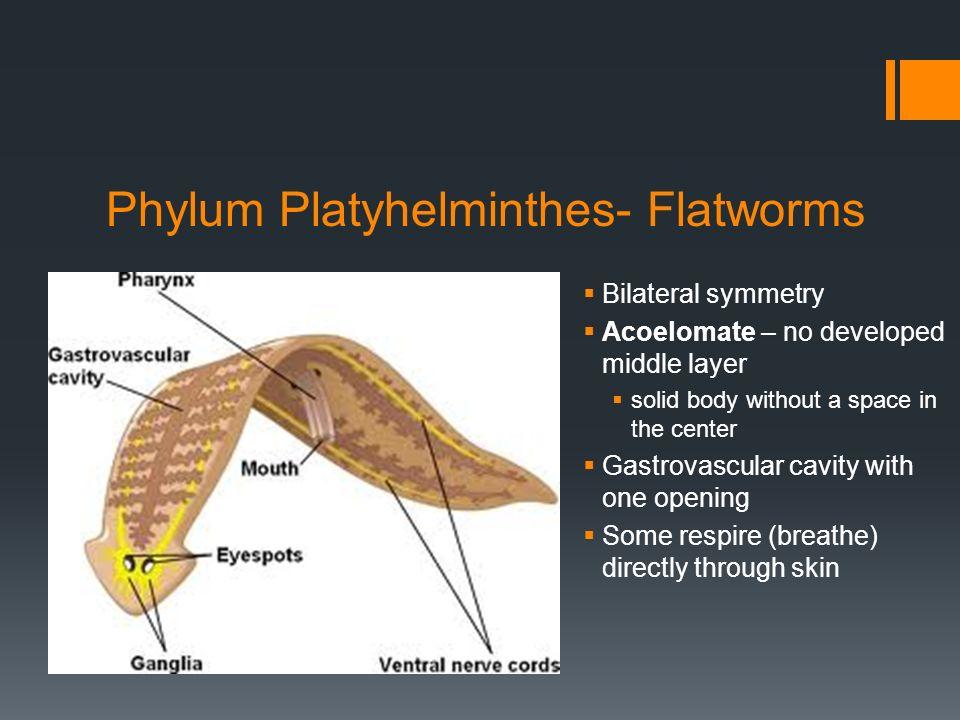 phylum platyhelminthes képek név szerint)