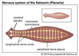 hpv rák szurdok vírus condyloma kolposzkópia