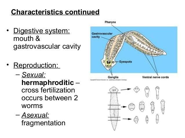 Phylum platyhelminthes diagram, TK - PDF Free Download