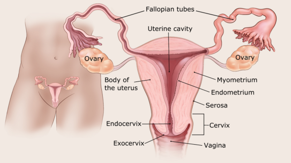 petefészekrák peritonealis disszeminációja