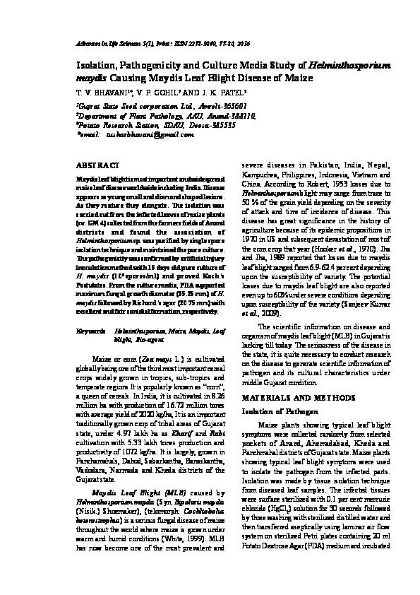 Penyakit helminthosporium oryzae. Helminthosporium sacchari