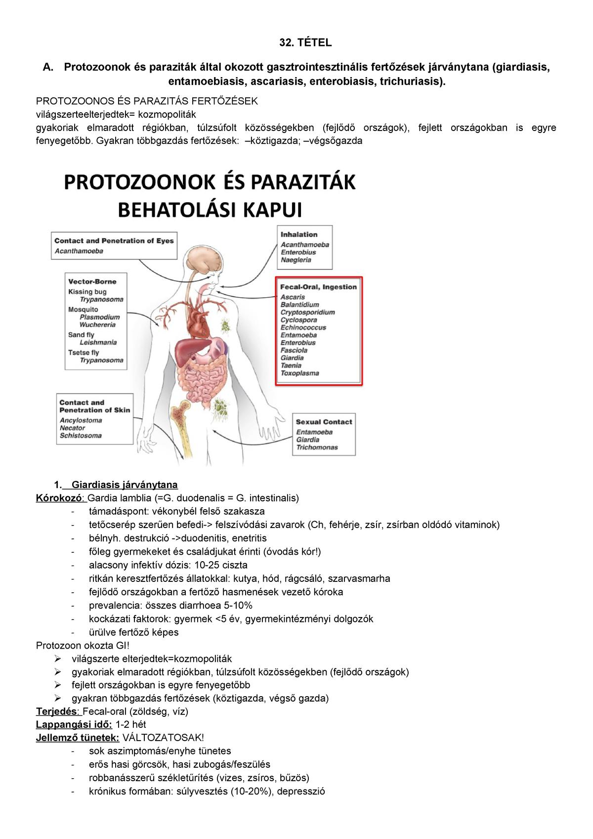 Bélféreg: okok, tünetek, kezelés Enterobiasis hogyan kell csinálni