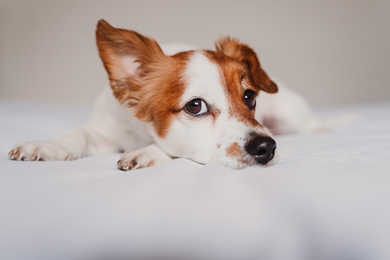 A kutyák és macskák így betegíthetnek meg