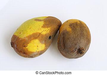 Paraziták mangó férgek. Betegség.! Csak erős idegzetűeknek! Fertőző? (2. oldal)